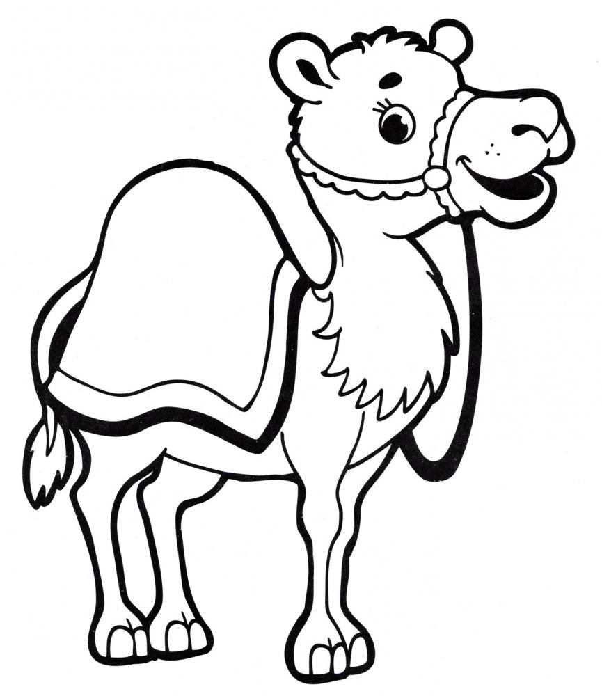Раскраска милый верблюд - скачать раскраску из раздела ...